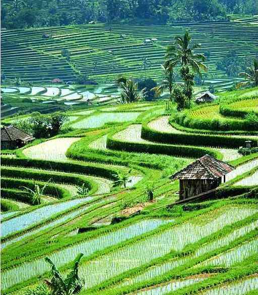 UBUD, em Bali!