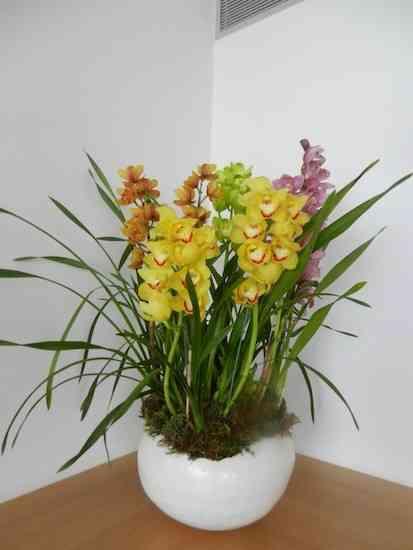 2013 06 Flores Anamaria 013