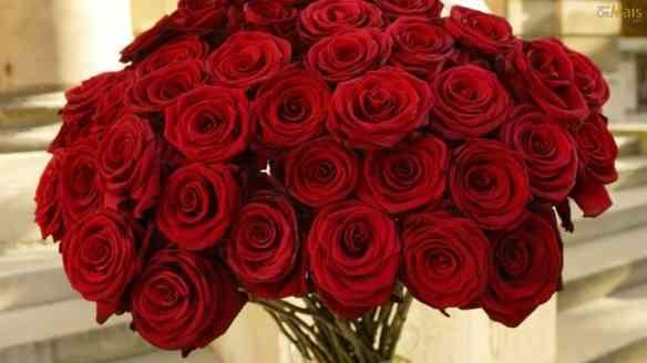 Um mar de rosas pra você!