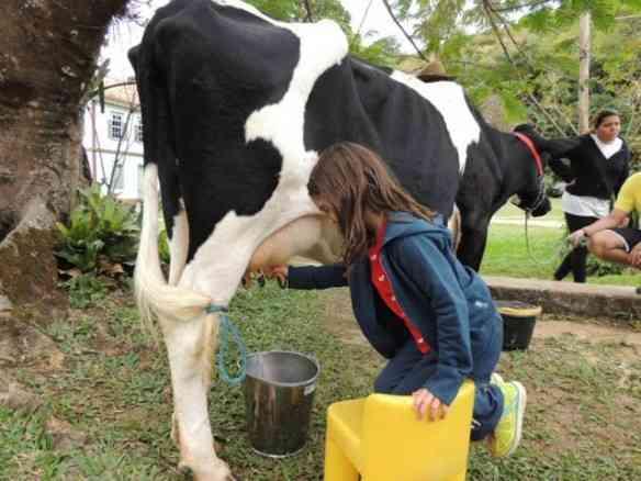 Prazeres redescobertos: tirar leite da vaca é um deles!