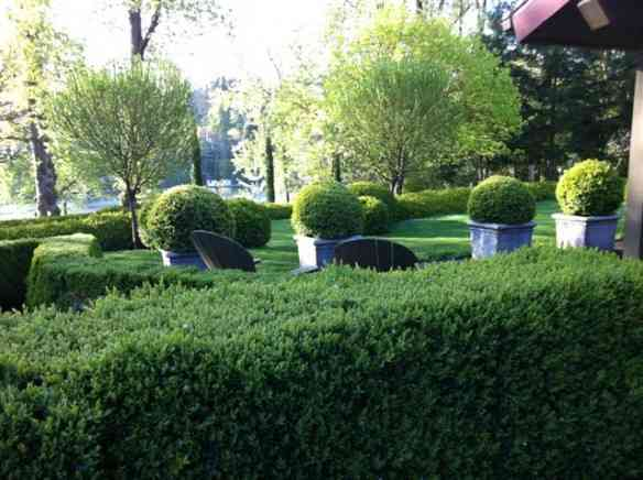 boxwood-sempervirens-hedge-and-globes