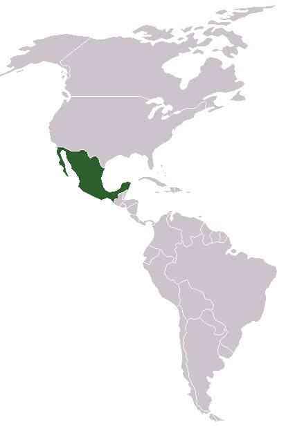 Vejam o passo a passo do meu roteiro mexicano!