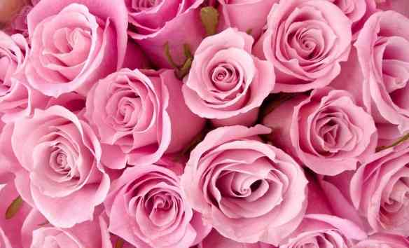 philo-fond-2014-rose-rose2
