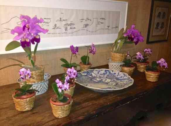 Usei, para florir o jantar, um conjunto de mini orquídeas que achei na nossa beloved Cadeg!