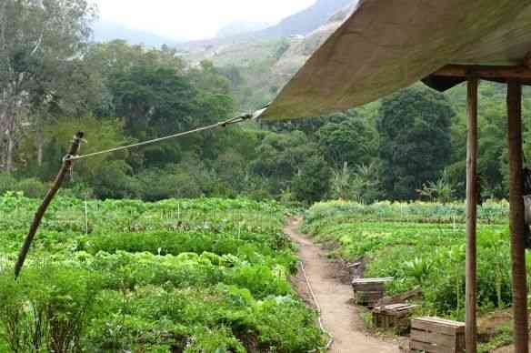 A horta de Correas, de outro ângulo!