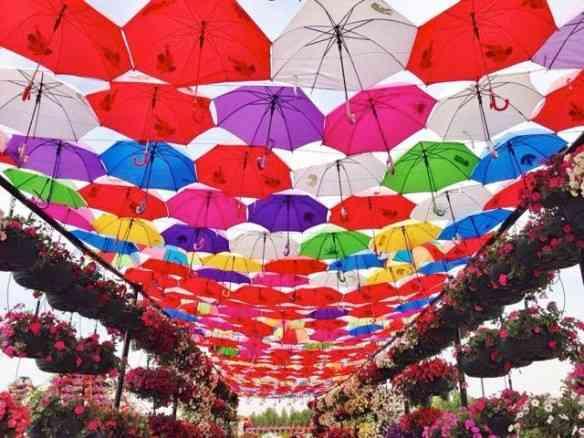 "Meu primeiro contato com ""Dubai Miracle Garden"" foi com esta foto que me deixou intrigada: O que seria esta sui generis cobertura de guarda-chuvas?!"