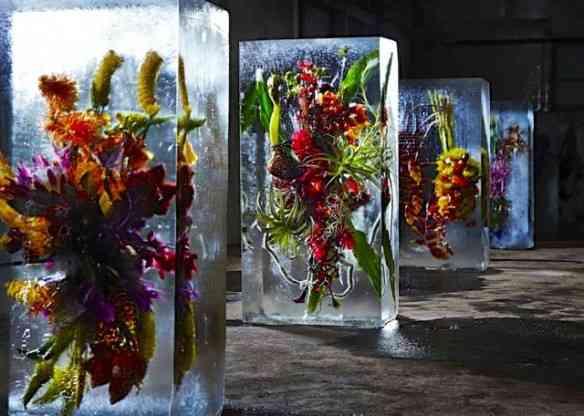 Expostas numa espécie de c6amara frigorífica gigante, os blocos de gelo floridos são, no mínimo, surpreendentes!