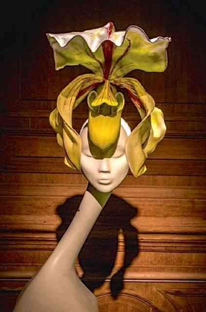 Amei este chapéu orquídea...