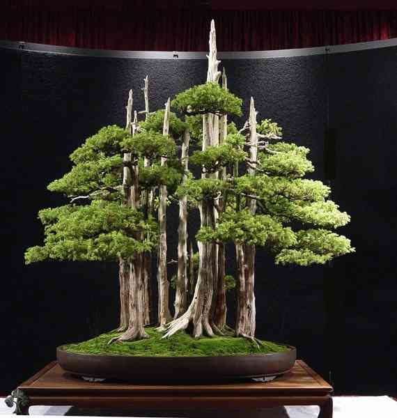 Goshin-bonsai