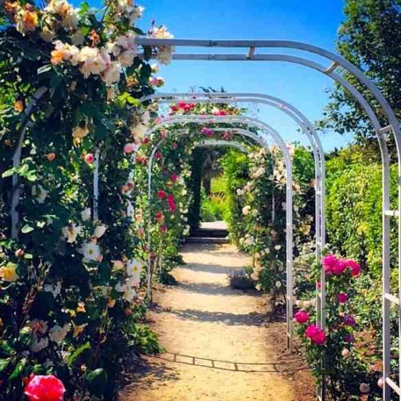 O lindo roseiral do Jardim Dior plantado, inicialmente,  pela mãe do costureiro, Madeleine Dior!