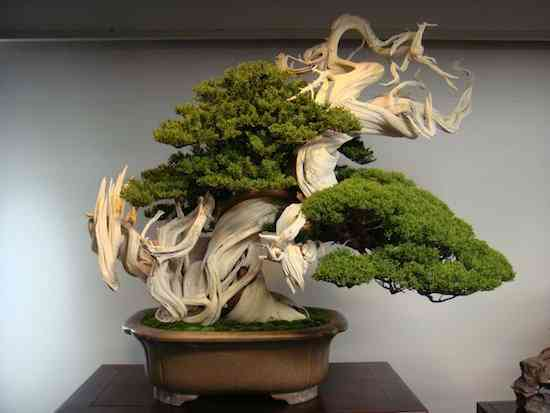most-beautiful-bonsai-tree