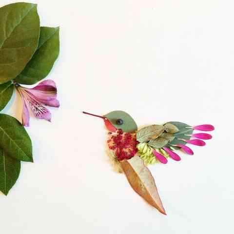 hummingbird_large