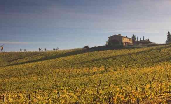 As vinhas de Castiglion...
