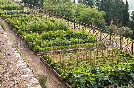 """A horta org6anica que abastece o """"complexo del Bosco""""..."""