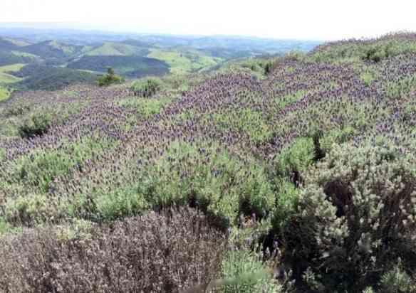Outro ângulo do Lavandário de Cunha!