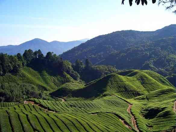 "Visual lindo do ""Cameron Highlands, em Pahang, no oeste da Malásia: visual lindo!"