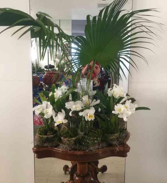 Eram um par de mesas, como esta, repletas de orquídeas lindas que Patrícia cultiva: enchem os olhos e o coração!