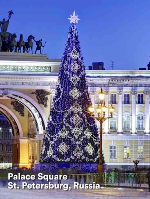 Esta árvore fica na Praça do Palácio Hermitage, na cidade de São Petersburgo, na Rússia